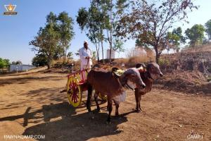 Bullock cart ride on camp I